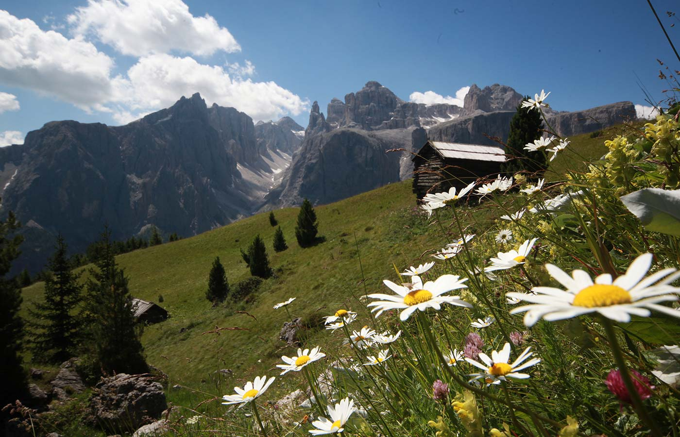 Flowery meadows, mountain huts and Dolomites in the sun